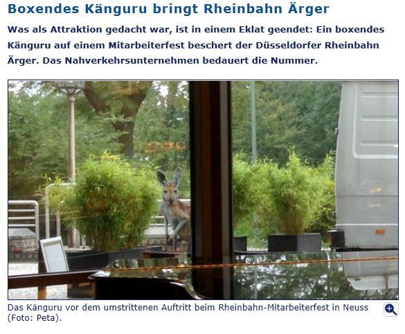Krisen-PR: Rheinbahn lässt Känguru boxen