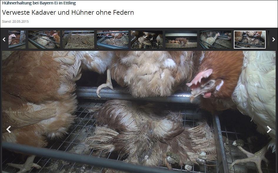 Krisen-PR Bayern-Ei