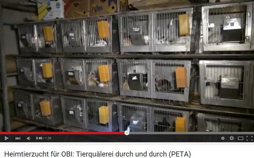 Krisen-PR: Die wachsende Macht von PETA