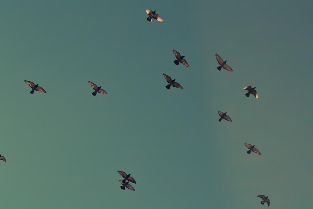 Schrauben am Limit: Wie Twitter vom Gezwitscher um #Twitter10k profitiert