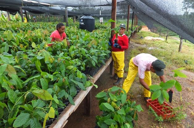 """Pressebild Ritter Sport: Arbeiter in Kakao-Baumschule auf der """"Finca El Cacao"""" in Nicaragua."""